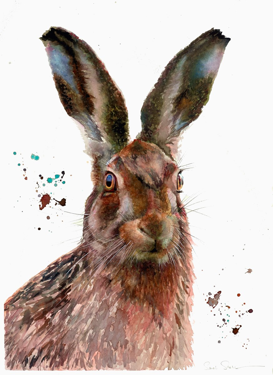 Brown Hare Study by sarah stokes -  sized 22x30 inches. Available from Whitewall Galleries